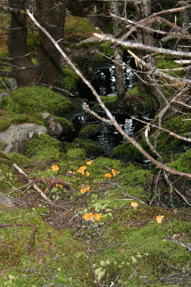 Hiking D'Iberville Trail (4/6)