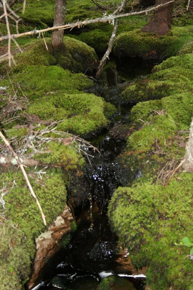 Hiking D'Iberville Trail (3/6)